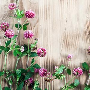 Cure santé avec nos plantes sauvages printanières