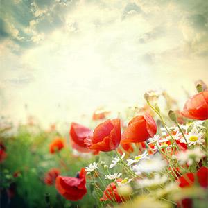 Au cœur de l'été, découvrez les trésors de fleurs qui nous entourent