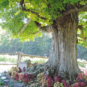 12 idées d'escapade sur la route des vins