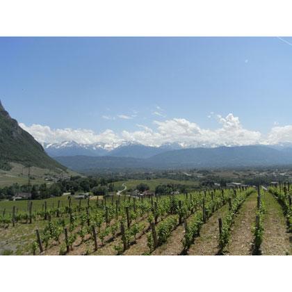 Quand les vins de Savoie taquinent les sommets